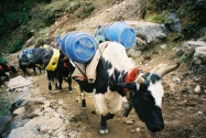 On the Everest trail